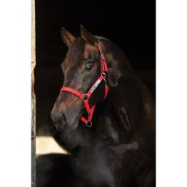 Horseware Field Safe Halfter