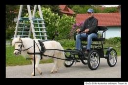 Minishettykutsche Minishetty Shettykutsche Ponykutsche Kutsche Gig Sulky 60 kg!