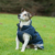 Bucas Freedom Hunde Decke, 300g 50-75