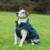 Bucas Freedom Hunde Decke, 500g 30-45