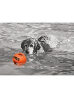 Hundespielzeug »BOMBER«