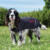 Weatherbeeta gewachster Hundemantel