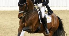 Classic Pony Express Escolar (Gute Neuenhof) und Hubertus Schmidt